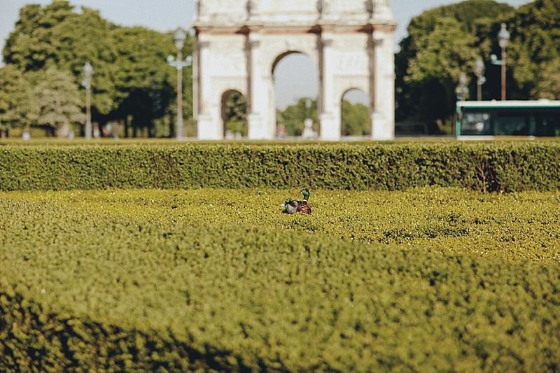 Povestuvine Fotosesija Paryziuje
